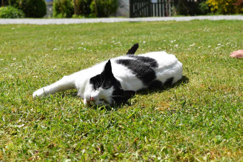 Wilson - Campsite cat