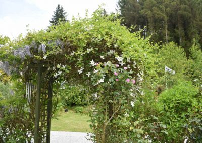 Clematis over gate